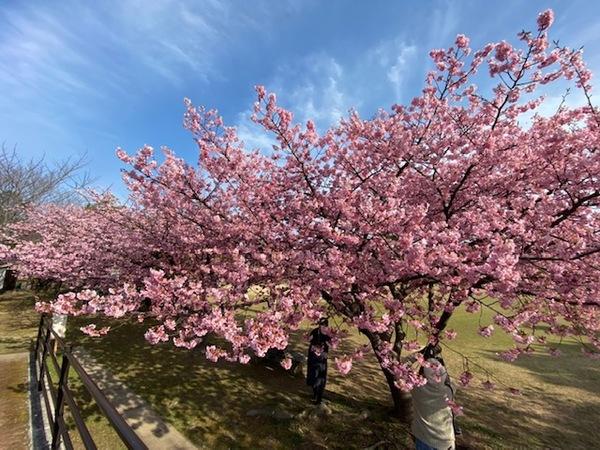 春の訪れ(^^♪